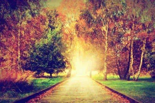 voyance-au-feminin-fr-article-blog-incarnation-ame-chemin-de-vie